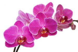1orchid