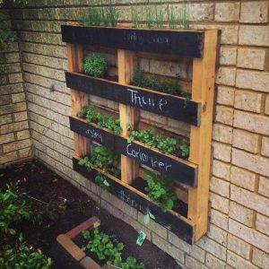 sow your herb garden in spring for summer