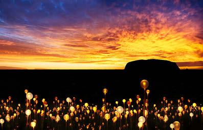 Uluru – The Field of Light