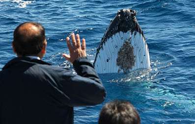 Sydney Eco Hopper Cruises