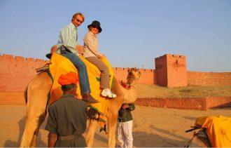 india-camel