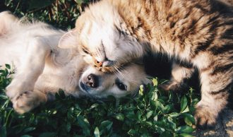 Is a dog or cat the perfect pet companion for your retirement lifestyle?