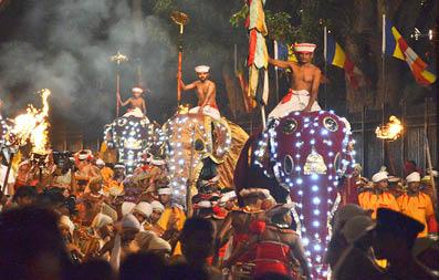 ninas-pathway-elephant