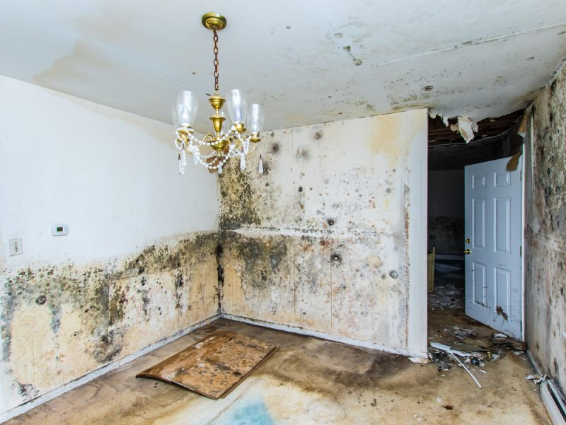 What to do about musty, toxic mould and mildew?