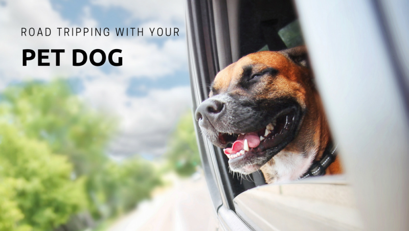 How to take a road trip with your pet dog