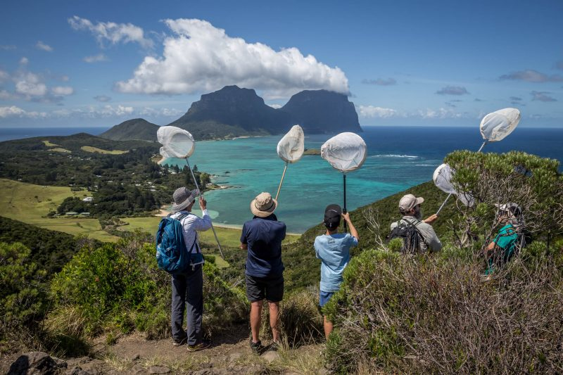 Participate or not on Lord Howe
