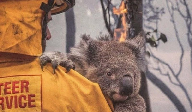 The best ways to help with the Australian bushfires crisis
