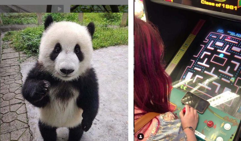 5 on the fly: Instagram accounts to make you smile
